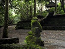 Monkey Forest Sanctuary - Bali Indonesia (09)